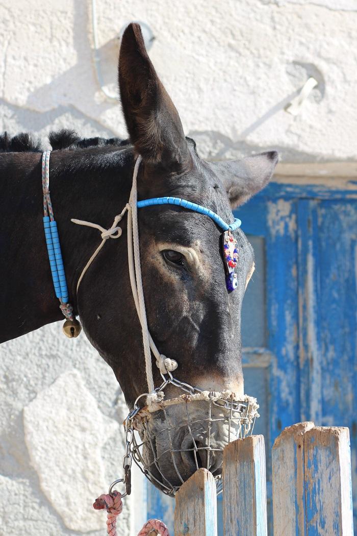 tourisme voyage Santorin Grèce
